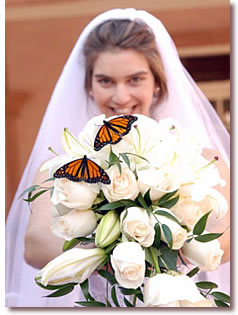 Bride with Butterflies on Bouquet